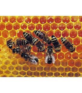 Пчелоотводки