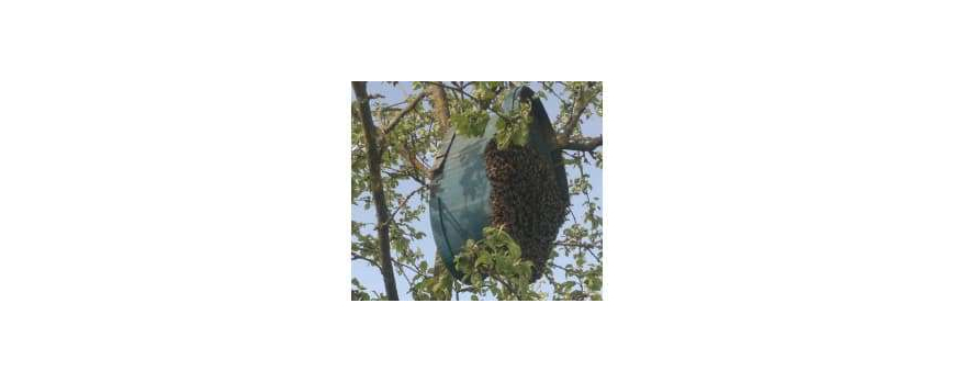 Пчелиный рой